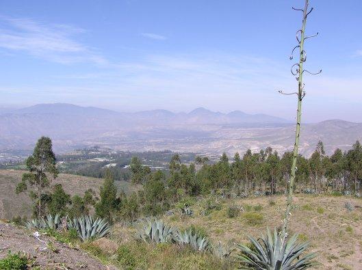 I bergslandskapen norr om Quito växer agaven vilt.