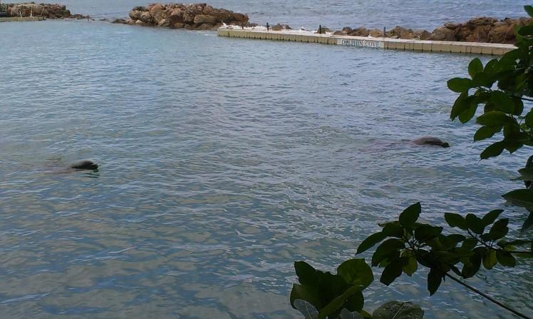 Delfinerna värmer upp inför vårt möte