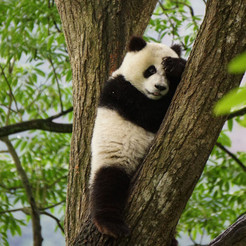 Foto: Allan Carlson, WWF